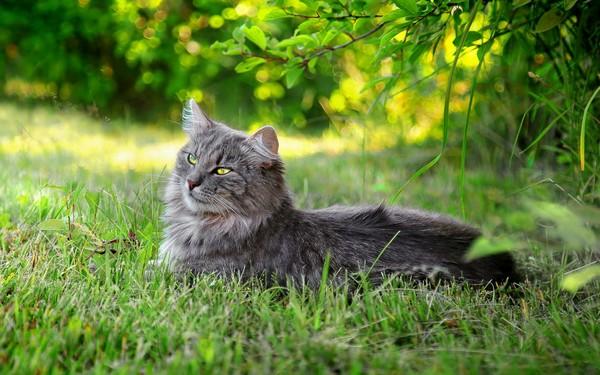 Кот отдыхает в траве