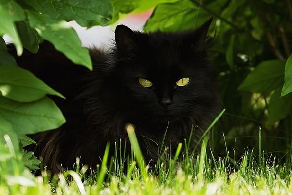 Кошка в кустах