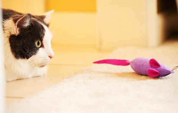 Простая тряпичная мышка может надолго увлечь питомца