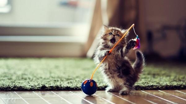 Игра для котенка - это серьезно